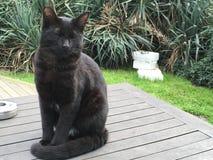 Zwierzę domowe kotów backround Obrazy Stock