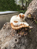 Zwierzę domowe kotów backround Obraz Stock