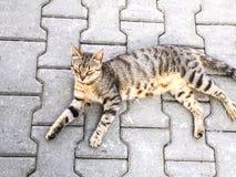Zwierzę domowe kotów backround Fotografia Stock