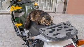 Zwierzę domowe kotów backround Zdjęcia Stock