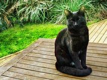 Zwierzę domowe kotów backround Fotografia Royalty Free