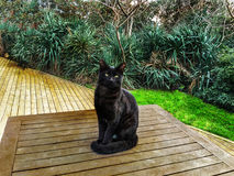 Zwierzę domowe kotów backround Zdjęcie Royalty Free