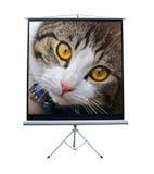 Zwierzę domowe kot na projektoru ekranie Zdjęcia Royalty Free