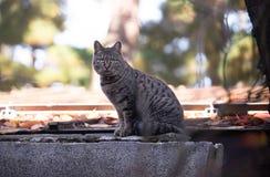 Zwierzę domowe kota obsiadanie Fotografia Stock