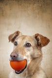 Zwierzę domowe pies Obraz Stock