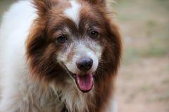 Zwierzę domowe pies obrazy stock