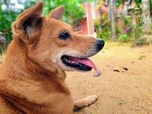 Zwierz? domowe pies zdjęcie stock