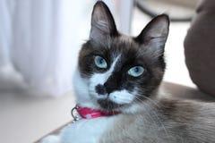 Zwierzę kot Obraz Royalty Free