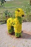Zwierzę od kwiatów Zdjęcia Royalty Free