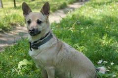 Zwierzę pies Zdjęcie Royalty Free
