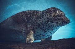Zwierzę podwodny Fotografia Stock