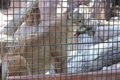 Zwierzę przy zoo Obrazy Royalty Free