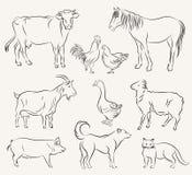 zwierząt gospodarstwa rolnego krajobraz wiele sheeeps lato Obraz Stock