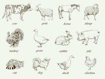 zwierząt gospodarstwa rolnego krajobraz wiele sheeeps lato Fotografia Stock