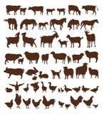 zwierząt gospodarstwa rolnego krajobraz wiele sheeeps lato Zdjęcia Stock
