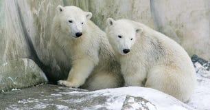zwierzęta Zdjęcia Royalty Free