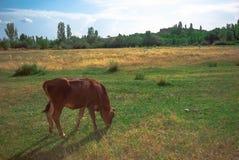 Zwierzęta 2 Fotografia Royalty Free