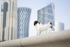 Zwierzęta i miasto Zdjęcia Royalty Free