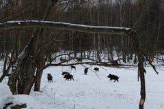 Zwierzęta w dzikim Zdjęcie Stock