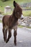 Zwierzęta w genere Zdjęcia Stock