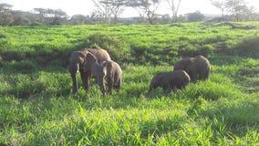 Zwierzęta w parku Obrazy Royalty Free
