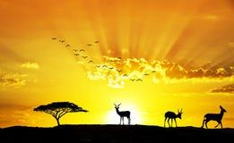 Zwierzęta w polu Zdjęcia Royalty Free