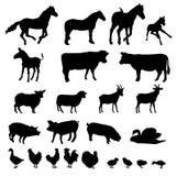 zwierzęcia gospodarstwo rolne Zdjęcia Royalty Free
