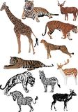 zwierząt koloru jedenaście set Zdjęcia Stock