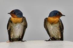 Zwillinge Stockfotos