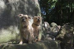 Zwillinge auf einem Felsen Stockbilder