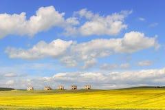 Zwischen Apulien und Basilikata: Bauernhäuser verlassen auf einem Gebiet von gelben Blumen Italien Lizenzfreie Stockfotos