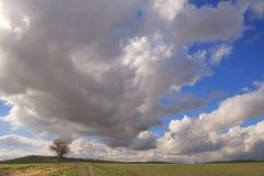 Zwischen Apulien und Basilikata: einziger Baum beherrscht durch Wolken Italien Stockbild