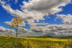 Zwischen Apulien und Basilikata Hügelige Landschaft mit Getreidefeldern Italien Lizenzfreies Stockbild