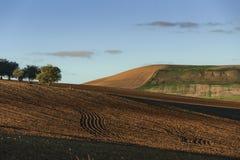 Zwischen Apulien und Basilikata: hügelige Landschaft mit Olivenhain auf gepflogenem Land herrschte durch Himmel, Italien vor Stockfoto