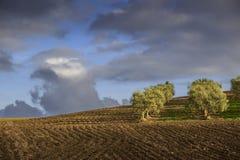 Zwischen Apulien und Basilikata: hügelige Landschaft mit Olivenhain auf gepflogenem Land herrschte durch Wolken, Italien vor Stockfotos