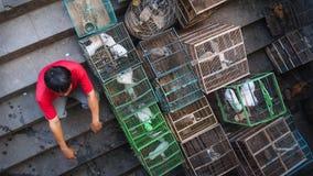 Zwischen dem Birdcage Lizenzfreie Stockfotos
