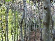 Zwischen den Bäumen stockfotografie