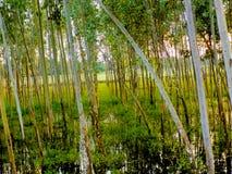 Zwischen den Bäumen Lizenzfreie Stockfotografie