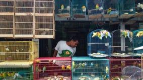 Zwischen Hühnern