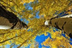 Zwischen Naturen Giants lizenzfreie stockfotografie