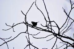 Zwischen verdrehten Zweigen lizenzfreies stockbild