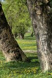 Zwischen zwei Bäumen Lizenzfreie Stockfotografie