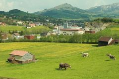 Zwitsers Royalty-vrije Stock Fotografie