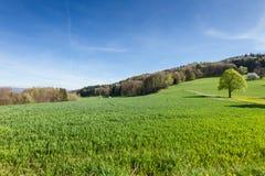 Zwitsers landschap Royalty-vrije Stock Afbeeldingen