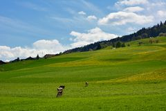 Zwitsers landschapsplatteland tijdens de lente Stock Foto