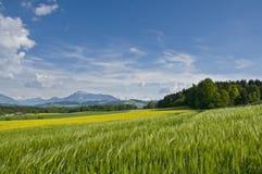 Zwitsers platteland Royalty-vrije Stock Foto's