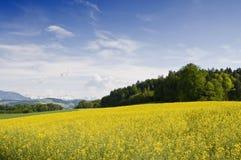 Zwitsers platteland Stock Foto