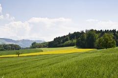 Zwitsers platteland Royalty-vrije Stock Afbeeldingen