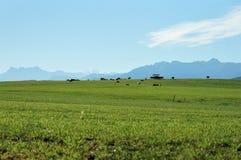 Zwitsers platteland op een zonnige dag stock fotografie