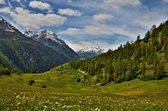 Zwitserse alp-Mening van de weg aan bos-Cha Royalty-vrije Stock Afbeelding